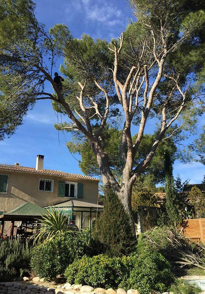 elagueur grimpeur abattage arbre
